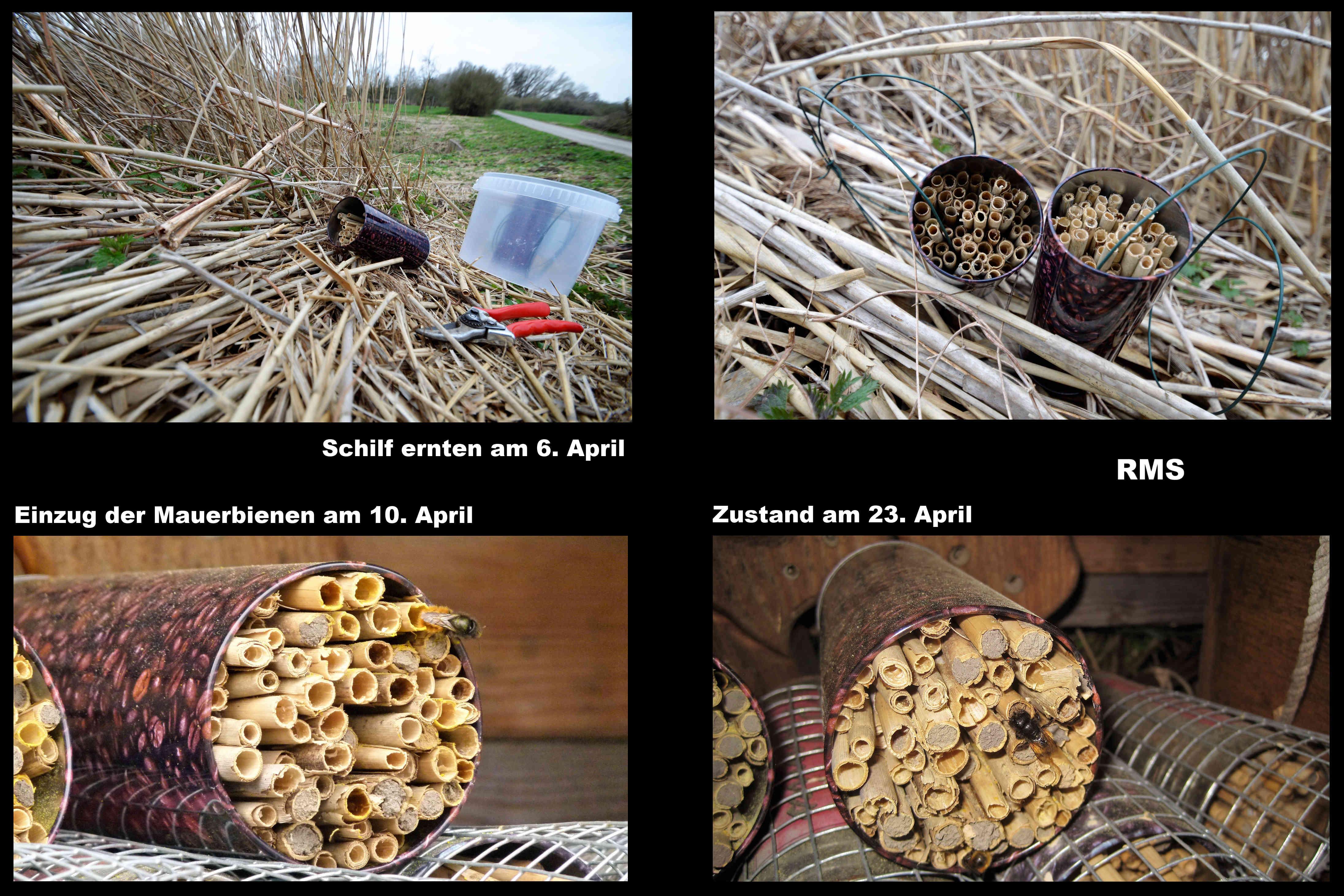 Wunderbar Collage Basteln Referenz Von Für Wildbienen